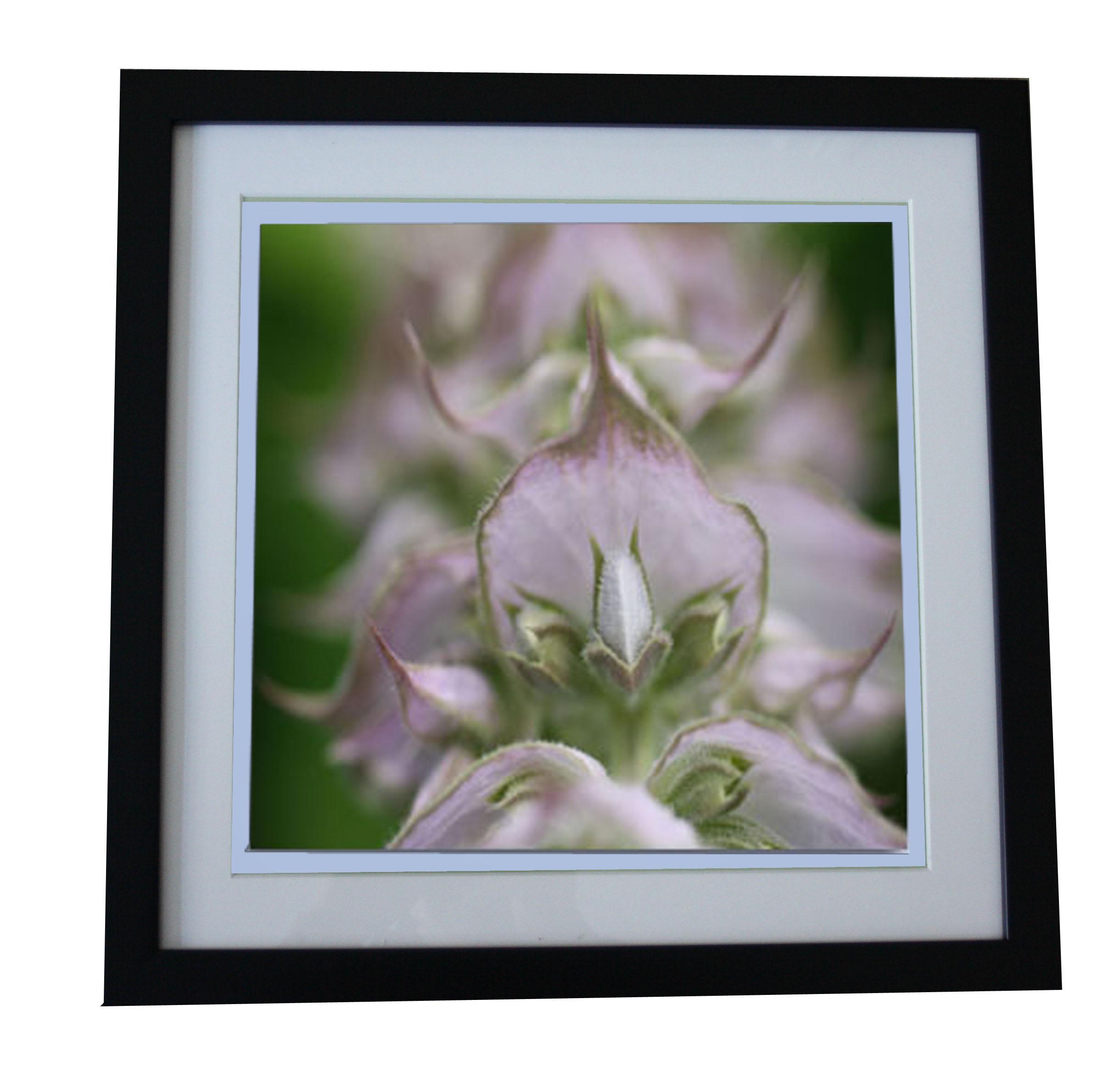 flora perpetua Rahmenbild Melissenblüte Melissenblüte - Motiv B23 ...