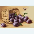 Basket of Plums - borduurpakket met telpatroon Luca-S
