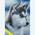 Snow Dog - Diamond Painting pakket - Wizardi Pakket met vierkante diamantjes