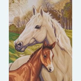 Horse and Foal - bundel van geschilderd stramien + borduurwol, te borduren in halve kruissteek |  | Artikelnummer: rp-132-103-bundel