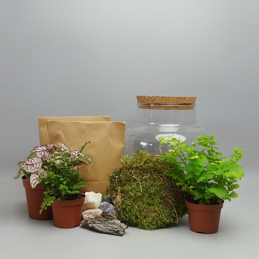 Terrarium Set DIY kaufen - The Botanical Room