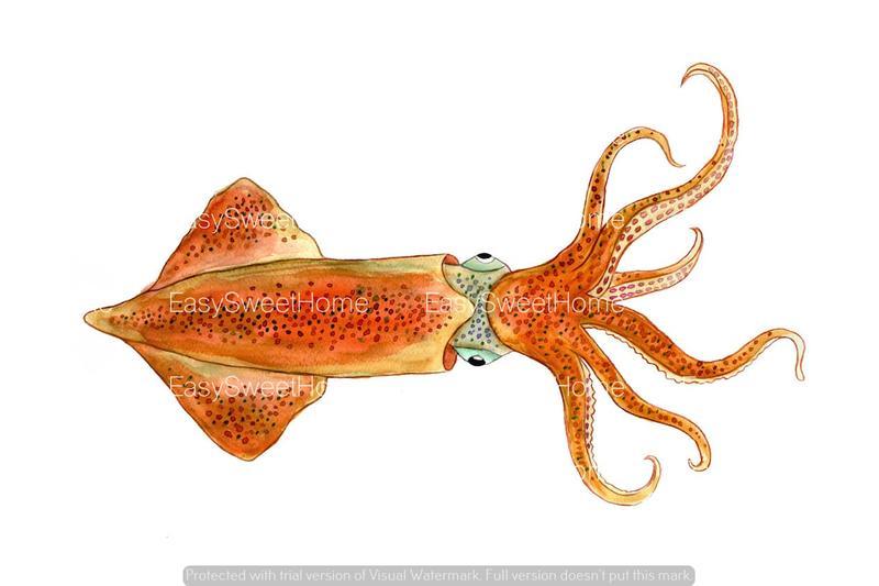 Easysweethome wandtattoo tintenfisch 1tlg - Fliesenaufkleber fische ...